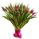 Fleurs roses de tulipes Image libre de droits
