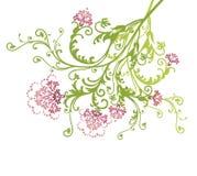 Fleurs roses de vecteur d'isolement Illustration de Vecteur