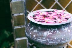 Fleurs roses en gros plan flottant en vieux bassin image stock