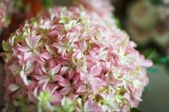 Fleurs roses et blanches Photographie stock