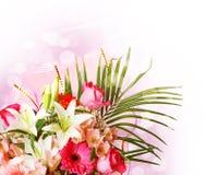 Fleurs roses et blanches douces de source Image libre de droits
