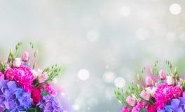 Fleurs roses et bleues lumineuses photos libres de droits