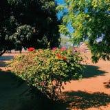 Fleurs roses et rouges images libres de droits