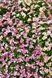 Fleurs roses fleuries avec la correction verte photo libre de droits