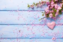Fleurs roses fraîches de Sakura et peu de coeur décoratif sur le bleu Images stock