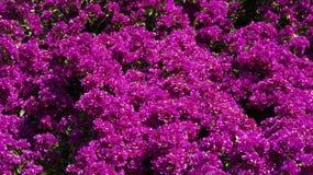 Fleurs roses idéalement pour un bureau Photo libre de droits