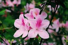 Fleurs roses Jour de source E images stock