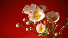 Fleurs roses mignonnes
