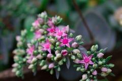 Fleurs roses minuscules en vert photographie stock libre de droits