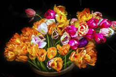 Fleurs roses oranges Bloemenmarket Amsterdam Holland Netherlands de tulipes Images stock