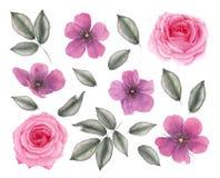 Fleurs roses réalistes tirées par la main d'aquarelle illustration de vecteur