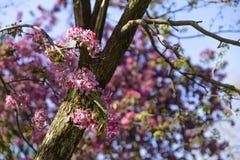 Fleurs roses sur l'arbre Photo stock