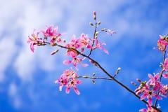 Fleurs roses sur le bleu Photo libre de droits