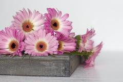 Fleurs roses sur le fond blanc Image stock