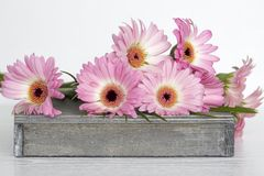 Fleurs roses sur le fond blanc Images libres de droits