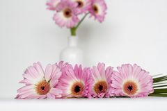 Fleurs roses sur le fond blanc Photographie stock libre de droits