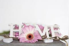Fleurs roses sur le fond blanc Photo stock