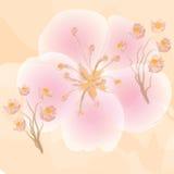 Fleurs roses sur le fond orange de watercolour Photographie stock libre de droits