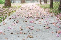 Fleurs roses sur le passage couvert concret photos libres de droits