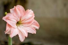 Fleurs roses sur un fond brouillé Photo stock