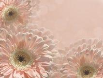 Fleurs roses sur un fond rose photographie stock libre de droits