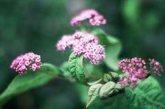 Fleurs roses sur un fond vert de feuillage Image stock