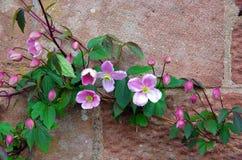 Fleurs roses sur un mur rose Images stock