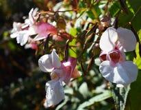 Fleurs roses sur un pré vert Photographie stock