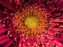fleurs roses sur une macro échelle photographie stock
