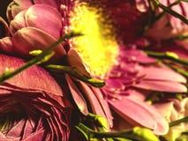 fleurs roses sur une macro échelle image stock