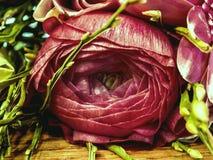 fleurs roses sur une macro échelle photographie stock libre de droits