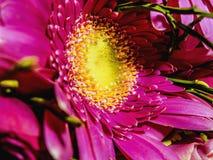 fleurs roses sur une macro échelle images libres de droits
