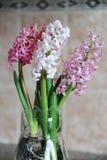 Fleurs roses tendres des ampoules de jacinthe dans un pot en verre Fond rose gentil, humeur de ressort Photographie stock