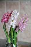 Fleurs roses tendres des ampoules de jacinthe dans un pot en verre Fond rose gentil, humeur de ressort Photo libre de droits