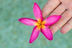 Fleurs roses thaïlandaises de plumeria avec le sable et le waterbackground photos libres de droits