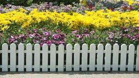 fleurs Rouge-et-blanches Photographie stock libre de droits