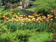 fleurs Rouge-jaunes de tulipe dans un parterre images libres de droits