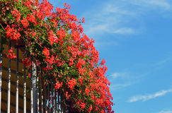 Fleurs rouges à un balcon Image stock