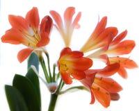 Fleurs rouges Photographie stock