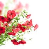 Fleurs rouges Photo libre de droits