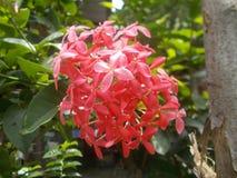 Fleurs rouges Images stock