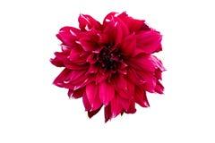Fleurs rouges Photos libres de droits