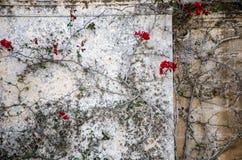 Fleurs rouges Image libre de droits