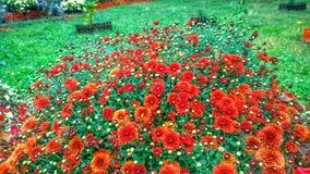 Fleurs rouges Photo stock