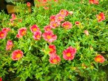 Fleurs rouges Photographie stock libre de droits