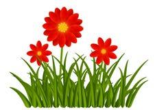 Fleurs rouges avec l'herbe verte Photo stock