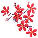 Fleurs rouges d'isolement sur le blanc Photo libre de droits