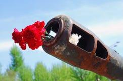 Fleurs rouges d'oeillet Image libre de droits