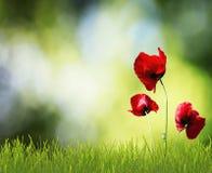 Fleurs rouges dans l'herbe Image libre de droits
