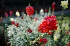 Fleurs rouges dans la forêt tropicale Photographie stock